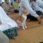 """قصة غربية لحيوان يداوم على حضور الصلاة """"صورة """""""